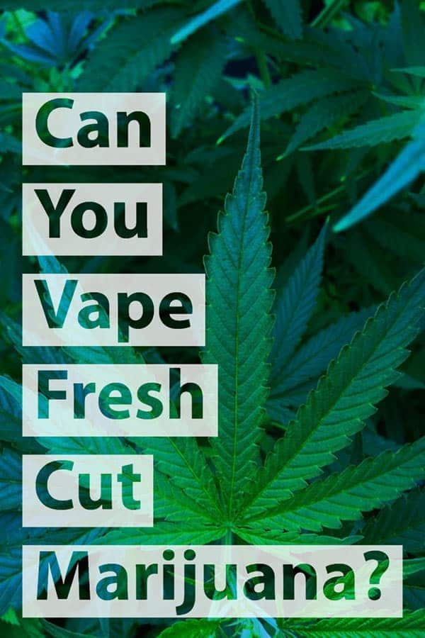 Can You Vape Fresh Weed or Speed up the Drying and Curing Process? 2