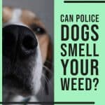 Can Dogs Smell Cannabis Vaporizers? - Vapes in the Hood