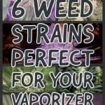 6 Perfect Cannabis Strains for Vaping - A Mini Guide! 1